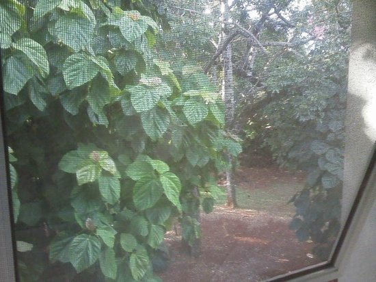 Hostel Inn Iguazu: vista al parque desde la habitación