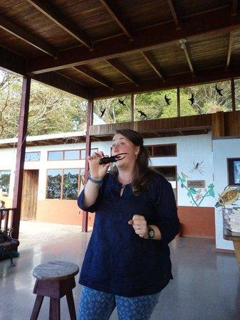 Monteverde Butterfly Garden (Jardin de Mariposas): Rhino beetle