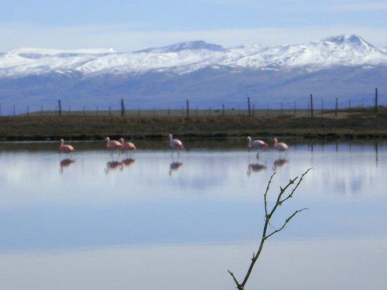 Laguna Nimez Reserve: flamencos