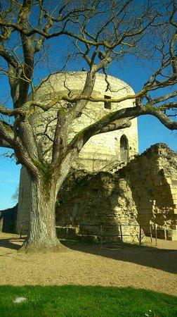 Logis Manoir de la Giraudiere : Citadelle Chinon