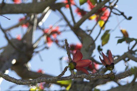 Sanibel Moorings Botanical Gardens: Don't know name