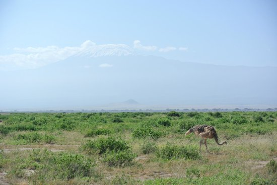 Tortilis Camp: Kilimanjaro in the background!