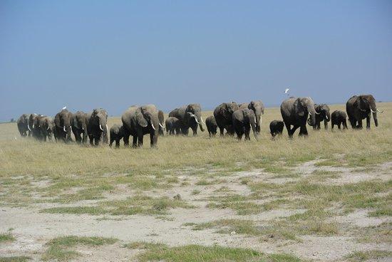 Tortilis Camp: Elephants!