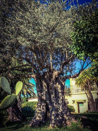 Hotel Villa Athena: Giardino
