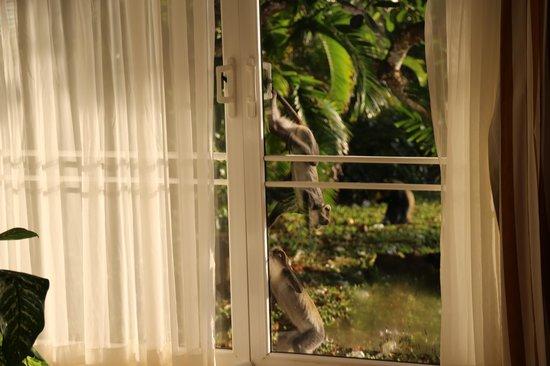 Leopard Beach Resort & Spa: Affenprobleme kommen in das Luxusappartement un d schieben sich selbst die Türen auf. Securite s