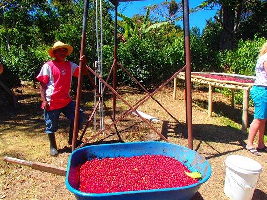 Boquete Coffee Tour : Hectar the coffee farmer