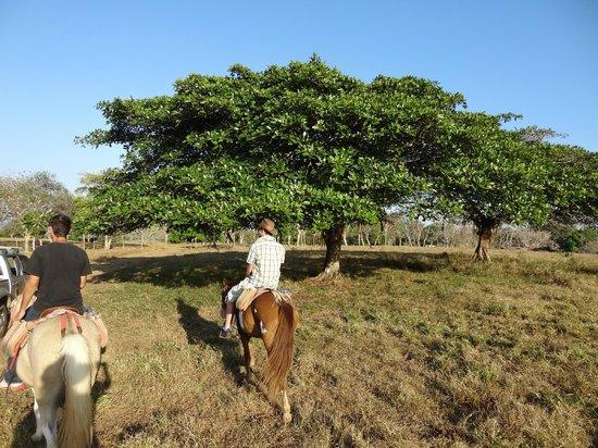 Indiana Horse Tours : veiws