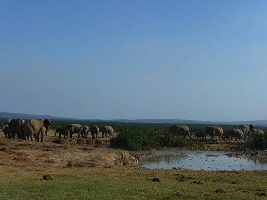 Chrislin African Lodge: Addo  Elephant Park
