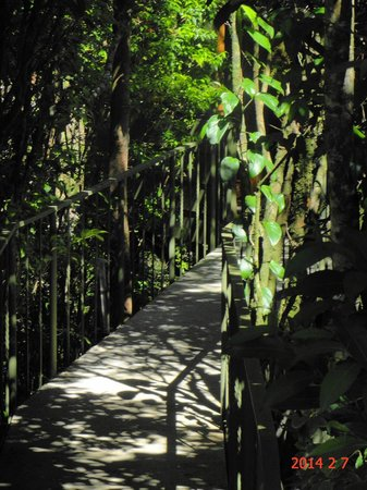Hidden Canopy Treehouses Boutique Hotel: Entry walk to Eden