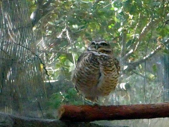 CuriOdyssey: Owl?