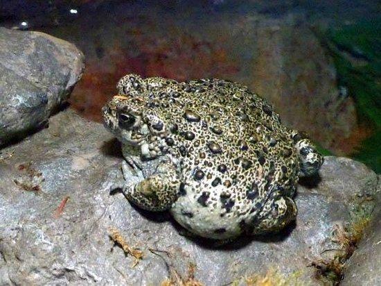 CuriOdyssey: Toad