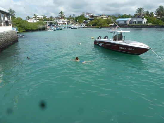 Hotel Solymar: Nadando con lobos marinos en el mar del hotel.