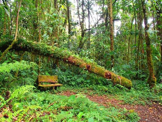 Sendero Los Quetzales (The Quetzales Trail): The trail
