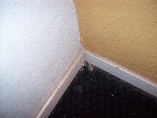 Knights Inn Abilene: Think this has been vacuumed?