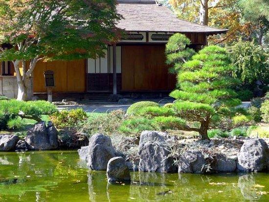 The San Mateo Japanese Garden: Tea room