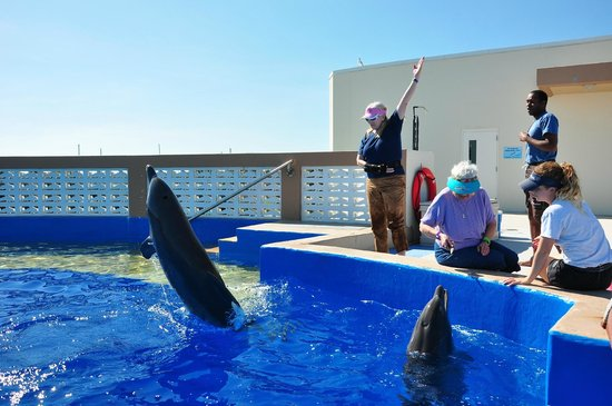 More hand signals for the dolphins. - Picture of ...