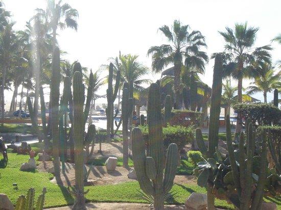 Posada Real Los Cabos: gardens