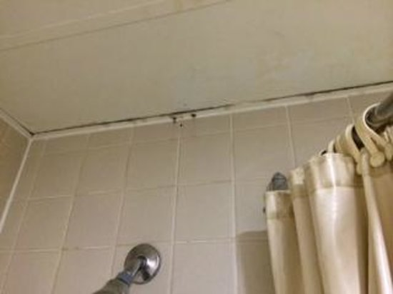 Quality Inn & Suites: Mold around the shower, more down the walls.