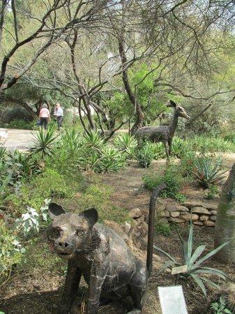 Tohono Chul : garden walk