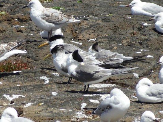 Бейсайд, Австралия: Nice seabirds
