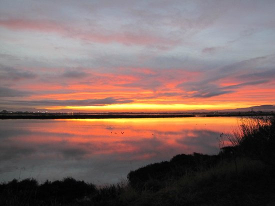 TownePlace Suites Redwood City Redwood Shores : Sunrise over Steinberger Slough