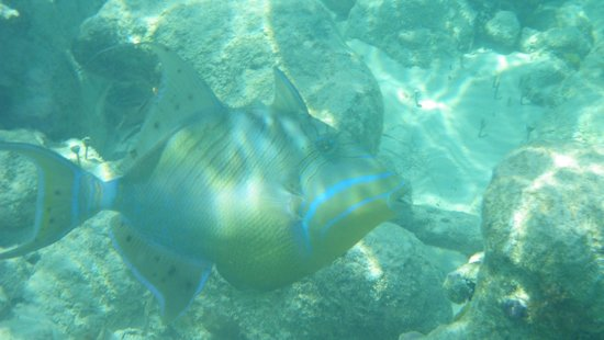 Coral Gardens on Grace Bay : Snorkeling at Coral Gardens beach