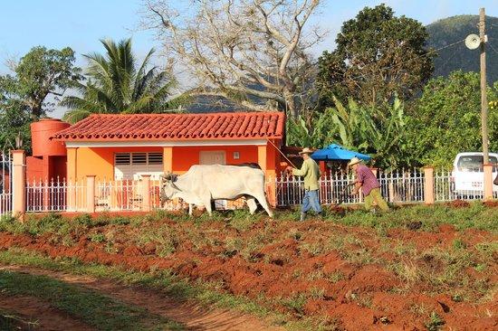 Villa El Habano: Au cœur de la nature