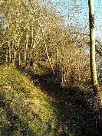 Kilronan Castle Hotel & Spa: One of the walks in Castle grounds