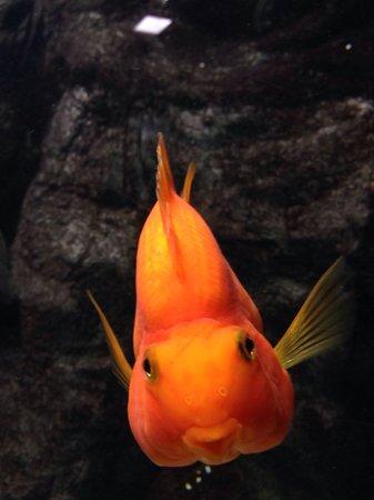 Lanzarote Aquarium : Nemo?