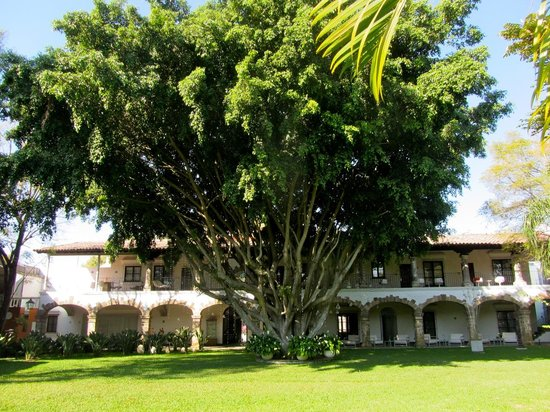 Anticavilla Restaurant, Hotel & Spa: 100 year old ficus tree shading the hotel rooms