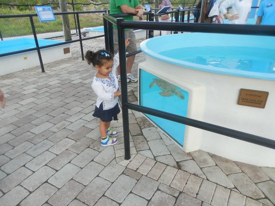 Loggerhead Marinelife Center: Turtles at eye-level for a toddler