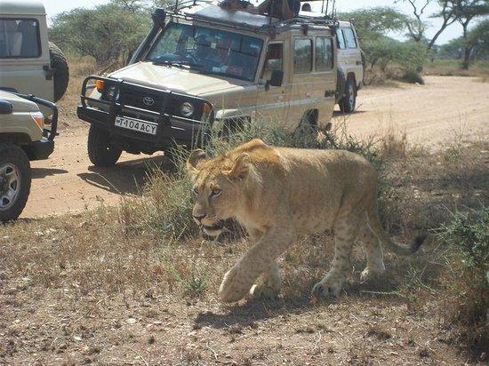 Rafiki Backpackers & Guesthouse: Serengeti