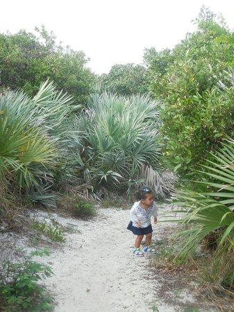 Loggerhead Marinelife Center: Loggerhead's Little Nature Trail