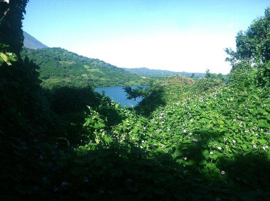 Posada Chico Largo: Hiking spot near the hotel. So many monkeys!