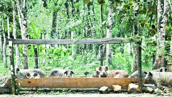 Belcampo Lodge : Farm Area