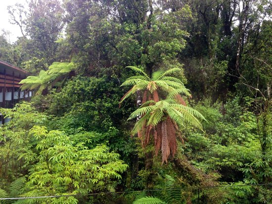 Te Waonui Forest Retreat: T-rex's home