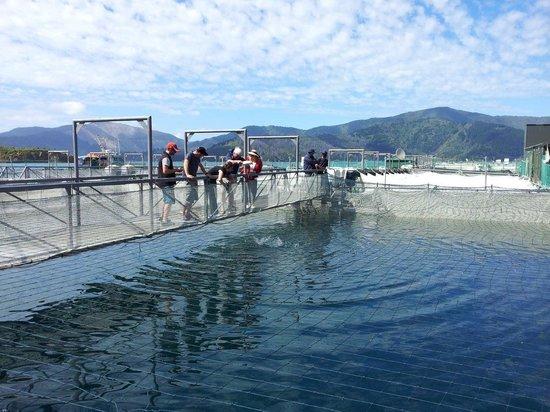 Seafood Odyssea Cruise: Guests walking around the NZ King Salmon Farm