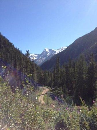 Bone Creek Wilderness Retreat : the trail