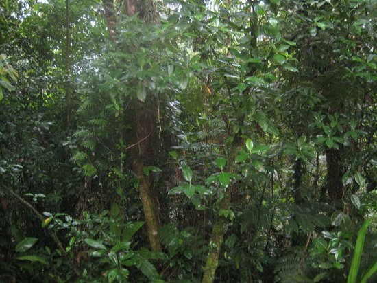 Rainforest Adventure Lodge: view from bungalow