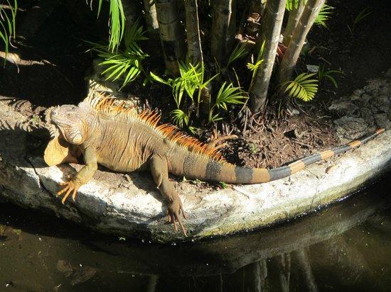 Iberostar Cozumel: the big guy that lives under the bridge