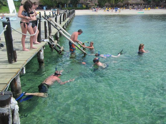Iberostar Cozumel: snorkeling and swimming by the pier