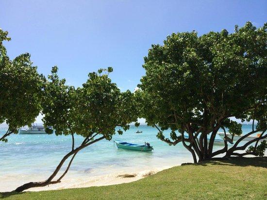Tropical Princess Beach Resort & Spa: catalina