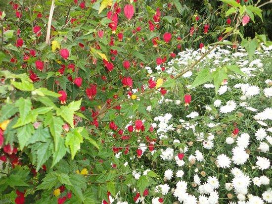 Plazoleta Aracama: primavera florida