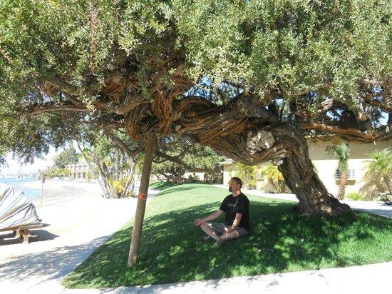 Bahia Resort Hotel : The zen tree