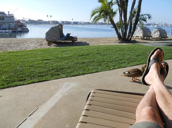 Bahia Resort Hotel : Life s a beach