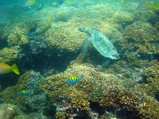 Pedasi Sports Club: Isla Iguana extremo sur