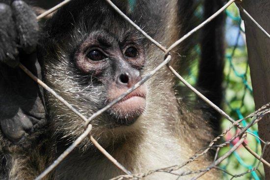 Island Marketing Ltd Roatan Cruise Excursions - Tours : Monkey Park
