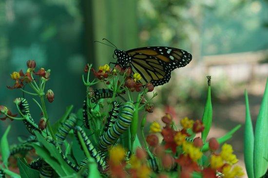 Island Marketing Ltd Roatan Cruise Excursions - Tours : Butterfly Gardens