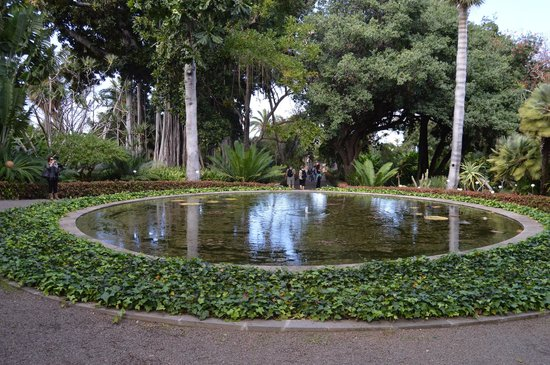 Otro lago - Picture of Botanical Gardens (Jardin Botanico), Puerto de la Cruz...