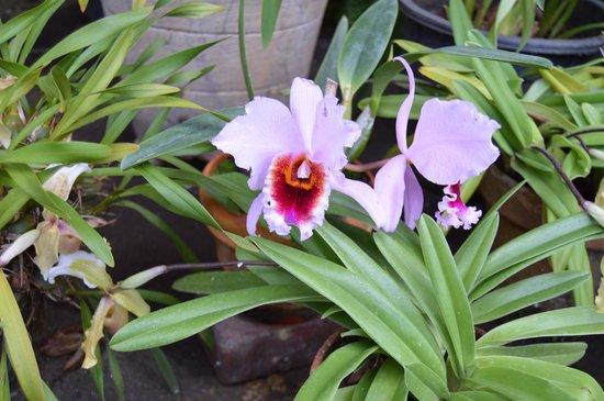 Jardín Botánico: Orquídea
